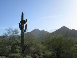 In May 1995, Scottsdale voters passed a modest sales tax increase to fund land purchases for the McDowell Sonoran Preserve.  Joan Fudala photo